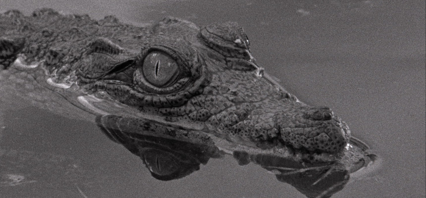 Tabu_catalogue2